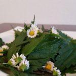 Brennesselsalat mit Gänseblümchen